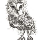 type_of_owl