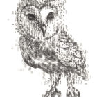 Keira_Rathbone_Type_of_Owl_A6_postcard
