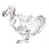 horniman_dodo