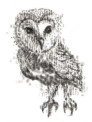 type_of_owl