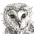 Type_of_Owl_detail1