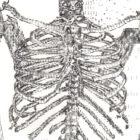 SkeletonNEW_detail2_web