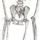 SkeletonNEW_detail3_web