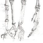 SkeletonNEW_detail4_web