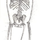 SkeletonNEW_web