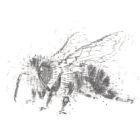 Keira_Rathbone_Original_size_Typewriter_Art_Bee_300_PRINT_web