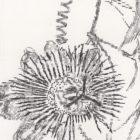 Keira_Rathbone_Passion_Flower_Original_Typic_detail4