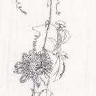 Keira_Rathbone_Passion_Flower_Original_Typic_web
