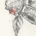 Keira_Rathbone_Typewriter_Art_Original_Chiswick_House_Type_of_Camellia_detail2