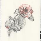 Keira_Rathbone_Typewriter_Art_Original_Chiswick_House_Type_of_Camellia_web_lower