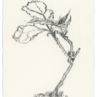 Keira_Rathbone_Typewriter_Art_Original_Type_of_Plant_web