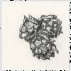 Keira_Rathbone_Typewriter_Art_Original_hops_web_lower