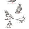 Keira_Rathbone_Original_Typewriter_Art_Pigeons_in_Lockdown_2020_PRINT_web
