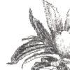 Keira_Rathbone_Typewriter_Art_Pineapple_levels_PRINT_detail1
