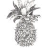 Keira_Rathbone_Typewriter_Art_Pineapple_levels_PRINT_web