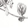 Keira_Rathbone_Honeysuckle_PRINT_detail3