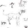 Keira_Rathbone_Original_Typewriter_Art_Types_of_Dogs_at_the_dog_show_detail3
