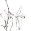 Keira_Rathbone_Typewriter_Art_Type_of_Flower_PASSION_detail2