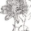 Keira_Rathbone_Typewriter_Art_Type_of_Flower_PASSION_detail4